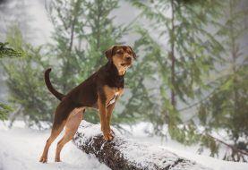 REVIEW: Self-Explanatory <i>A Dog's Way Home</i>