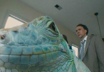 Lizard Brains and Fish Dreams in <i>Bad Lieutenant: Port of Call - New Orleans</i>